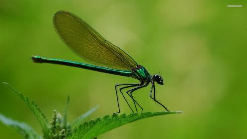 dragonfly-4